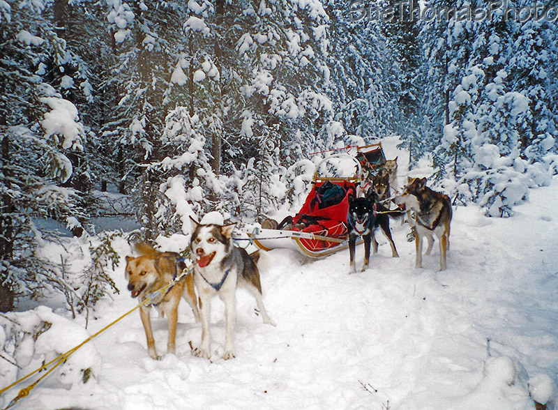 Dogsledding on the Quest trail, Yukon