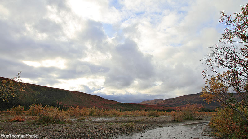 View of Teklanika River near the Campground, Denali National Park