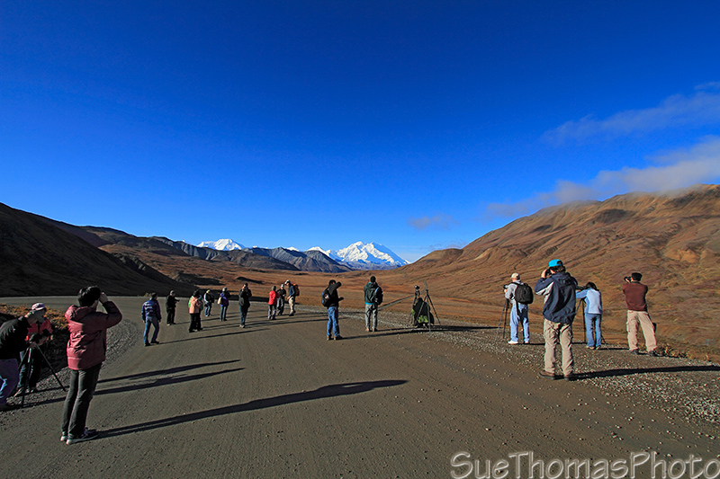 Denali National Park bus tour