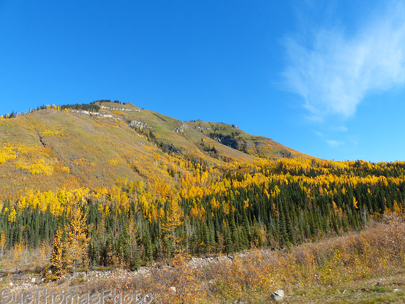 Fall colours on the mountains