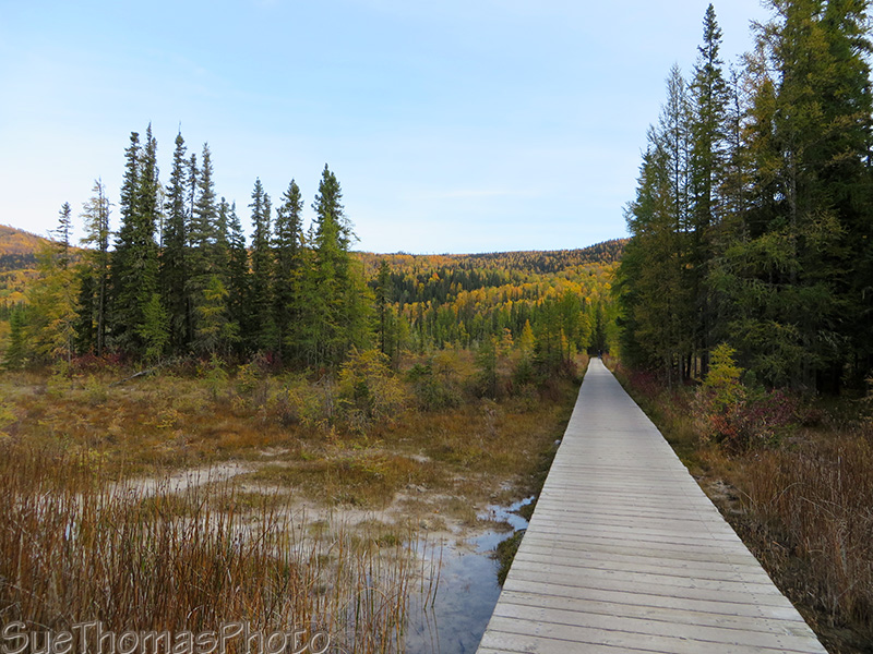 boardwalk to Liard Hotsprings