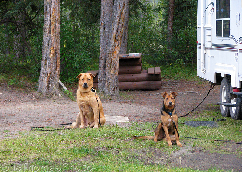 Jake & Tazz at Morley Lake Recreation Site, BC