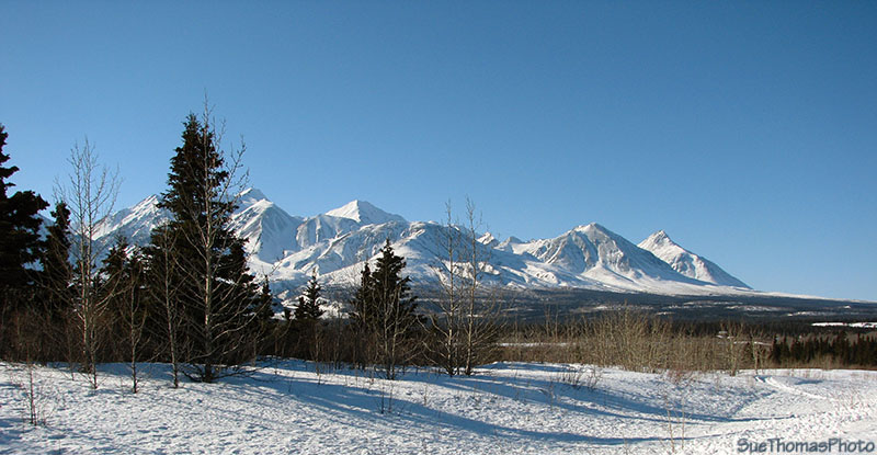 Near Bear Creek north of Haines Junction, Alaska Highway