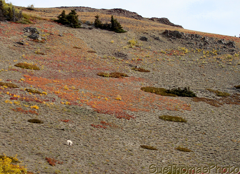 Sheep Mountain, Sheep Creek hike, Kluane National Park, Yukon