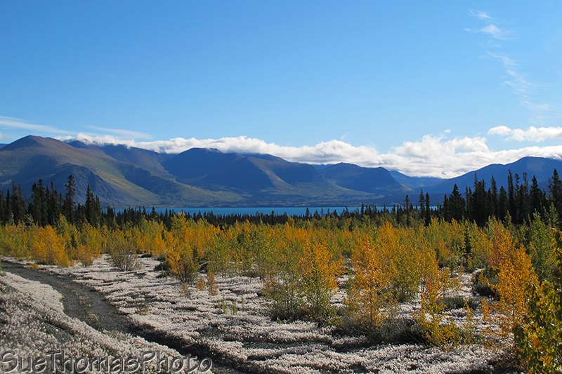 Kluane Lake view