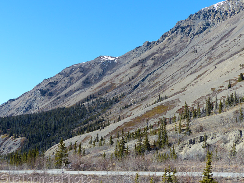 Dall Sheep in the distance