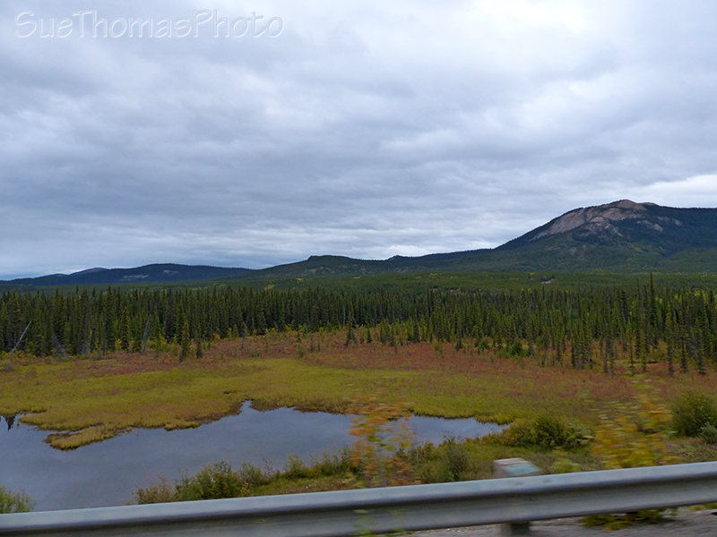 Marsh area beside Alaska Highway