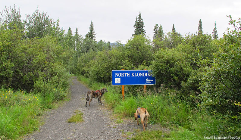 North Klondike hiking trail in Tombstone campground, Yukon